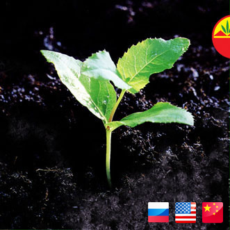 buy sell peat moss russia sakhalin
